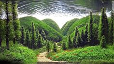 """""""Whisper of the Pines"""" ~ Aquarium aquascape: when done correctly it creates a piece of living art. ~ Miks' Pics """"Man Made lll"""" board @ http://www.pinterest.com/msmgish/man-made-lll/"""