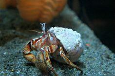 Can Hermit Crabs Eat Betta Food