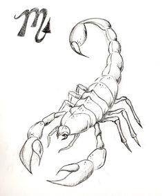 sketch scorpion - Cerca con Google