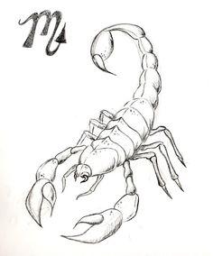sketch scorpion - Cerca con Google