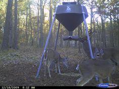 Diy Deer Feeder Inspirational Boss Buck Feeder Boss Buck Field S 600 Protein. Best Deer Feeder, Gravity Deer Feeders, Homemade Deer Feeders, Rabbit Repellent, Deer Tail, Deer Attractant, Mule Deer Hunting, Hunting Clothes, Super Extra