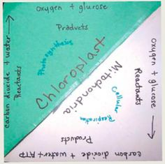 Respiration v. Photosynthesis foldable
