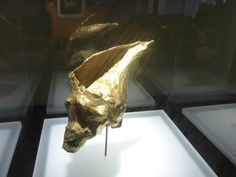 Museum del Oro in Bogota, Colombia, has the biggest collection of pre-colombian golden artefacts in South America. Gold wrapped around a Conch shell