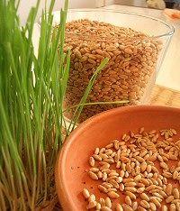 Csíráztatás Green Zone, Paleo, Beans, Vegetables, Health, Gardening, Food, Kids, Children