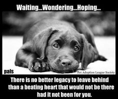 Waiting, Wondering, Hoping.  If you're interested in fostering or adopting, contact any local shelter or rescue TODAY!  So many babies need temporary homes. You can be the difference between life and death.