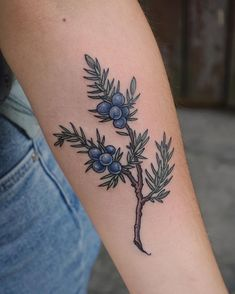 Juniper branch tattoo on the left forearm Botanisches Tattoo, Piercing Tattoo, Back Tattoo, Body Art Tattoos, Small Tattoos, Sleeve Tattoos, Tatoos, Samoan Tattoo, Polynesian Tattoos
