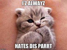15 Top Cat Memes Today