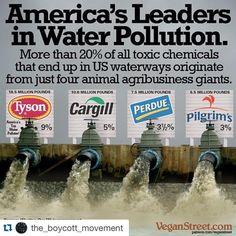 Believe it or not, fully a fifth of all US water pollution is caused by just four animal agriculture companies (mostly raising and processing chickens). Go an eco-friendly ethical diet Save Our Earth, Save The Planet, Angst Quotes, Vegan Memes, Vegan Quotes, Water Pollution, Plastic Pollution, Our Environment, We Are The World