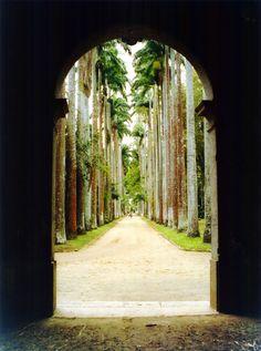Rio de Janeiro Botanical Garden, Brazil