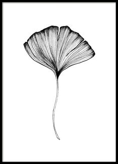 Ginko Leaf Poster i gruppen Posters / Botaniska hos Desenio AB Beauty Illustration, Leaf Illustration, Poster 40x50, Gold Poster, Leaf Photography, Photography Flowers, Artistic Photography, Vintage Photography, Leaf Skeleton