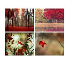 40% OFF, Fall sale, Autumn photography - The color of Fall - 4  8x10 photographs, collection, red black orange