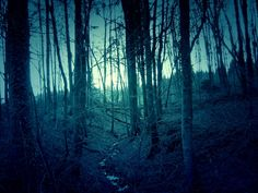 Nyctophobia is the irrational fear of darkness and is far more common and more debilitating than most people realize. Credible studies have shed some light on the fear of darkness. Spooky Woods, Facing Fear, Scary Tales, Fear Of The Dark, Feeling Nauseous, Night Terror, Nothing To Fear, The Upside, Norway Travel