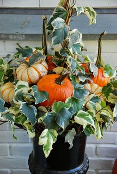 long stemmed pumpkins and ivy