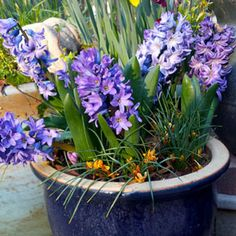 Layer Bulbs in Pots Now for a Spring Full of Blooms | Garden Club