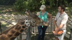 The Real Wild Animals of New Orleans: Episode 5 of 10 - Sky High with the Giraffes