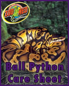 Check out Zoo Med's custom Care Sheet for Ball #Pythons. Find more Care Sheets available on our website.