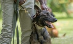 Detection dogs help Uganda double down on illegal traffickers Double Down, Interesting News, Four Legged, Tanzania, Uganda, African, Dogs