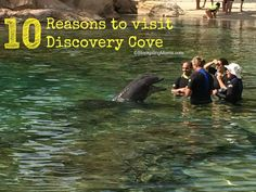 Day of Paradise at Discovery Cove Swimming with the Dolphins 10 Reasons to visit Discovery Cove in Orlando, Reasons to visit Discovery Cove in Orlando, FL Best Vacation Destinations, Best Vacation Spots, Florida Vacation, Florida Travel, Dream Vacations, Florida Trips, Florida 2017, Florida Living, Family Vacations
