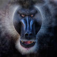 Drill monkey by Maika Loquetedigalarubia - Photo 115872927 / 500px