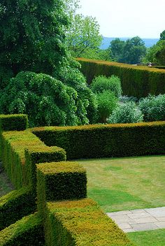 Clipped hedges and natural growing trees. Garden Hedges, Topiary Garden, Garden Art, Garden Landscaping, Garden Design, Formal Gardens, Outdoor Gardens, Landscape Architecture, Landscape Design