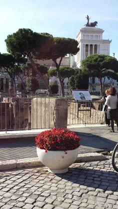 PRIMAVERA planters in #Roma, via Alessandrina, Piazza Venezia, Colosseo #Bellitalia #marble street furniture - arredo urbano - mobiliario urbano - mobilier urbain