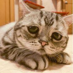 Грустный кот завоевал сердца поклонников во всем мире. ФОТО, ВИДЕО - Woman.ForumDaily