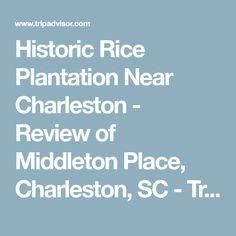 Historic Rice Plantation Near Charleston - Review of Middleton Place, Charleston, SC - TripAdvisor