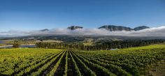 Private guided tour to the best coastal wine estates that the picturesque Hemel en Aarde Valley has on offer. Heaven On Earth, Wine Country, Tour Guide, South Africa, Tours, Explore, World, Travel, Outdoor