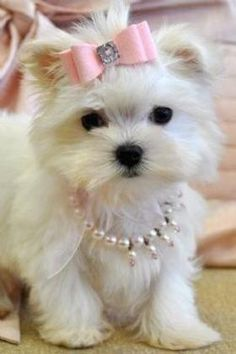 Sweet baby girl pup which is one of my photos at http://pinterest.com/Timtrainer/