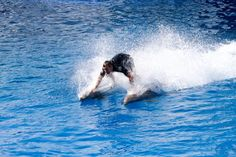 Dolphins show, LOceanografic, Valencia Travel Advisor, Trip Advisor, Valencia, Dolphins, Places Ive Been, Beautiful Places, Traveling, Waves, City