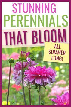 Perrenial Flowers, Flowers Perennials, Planting Flowers, Perennial Flowers For Shade, Flower Gardening, Flowers For Garden, Flowers That Like Shade, Sun Perrenials, Best Perennials For Shade