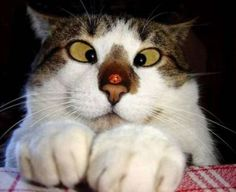 Funny cat face