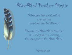 Blue Bird Feathers Magick