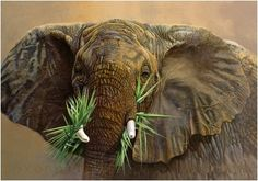 Hyperréalisme animalier : « Tembo » - Danielle Beck. #animaux #fichepedaarto