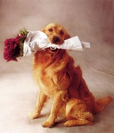 Открытка собака с цветами