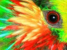 Fig Parrot EYE