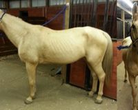 Severely Charge Oklahoma Man in Horse Abuse Case!