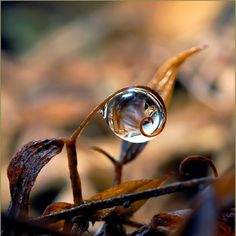 Drops Of Beauty Ming Gullo Tiny Worlds In Water Drops - Amazing images captured tinniest water droplets