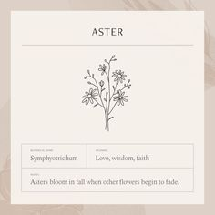 To many people, tattoos are exotic and daring things to get into. Aster Tattoo, Aster Flower Tattoos, Simple Flower Tattoo, Birth Flower Tattoos, Dainty Tattoos, Hot Tattoos, Mini Tattoos, Small Tattoos, Tree Tattoos