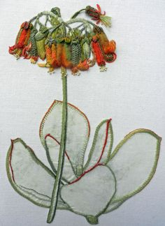 Pig's Ear Botanical – Cotyledon orbiculata with Lesley Turpin-Delport