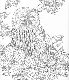 harmony of nature adult coloring book pg 15 - Colour In Stencils
