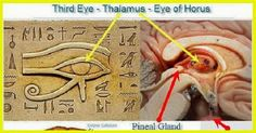 Natural Cures Not Medicine: Why you should decalcify your pineal gland and how