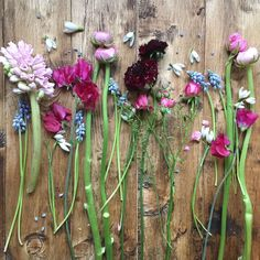 Blue Muscari, Pink Hyacinth, Snowdrops, Sweetpea, Ranunculus, & Scabious. Image by Eden Blooms Florist.