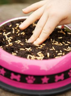 Planting Cat Grass Seed