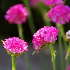 10 No-Fuss Perennials for the Lazy Gardener