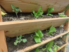 Gardening, Plants, Gutter Garden, Ideas, Lawn And Garden, Plant, Planets, Horticulture