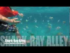#Snorkelling with Kids at Shark Ray Alley, #Ambergris Caye in Belize San Pedro Belize, Independence Of The Seas, Royal Caribbean Ships, Cruise Europe, Ambergris Caye, Marine Reserves, Snorkelling, Grand Cayman, Marine Life