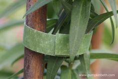 Velcro One-Wrap Plant Ties are reusable. These plant ties are ideal for everyone, but as these ties are so easy to use, they are perhaps especially useful for gardeners with very young hands or arthritic hands that would normally struggle tying in plants. Plant Supports, Different Plants, Ties, Herbs, Gardening, Easy, Neck Ties, Garten, Tie