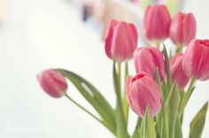 spring is coming - tulips are coming up!! come on already :)