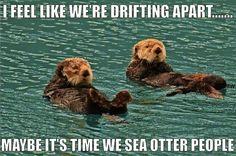 Drifting otter